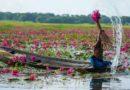 Bangladesh: Kingdom of water lily