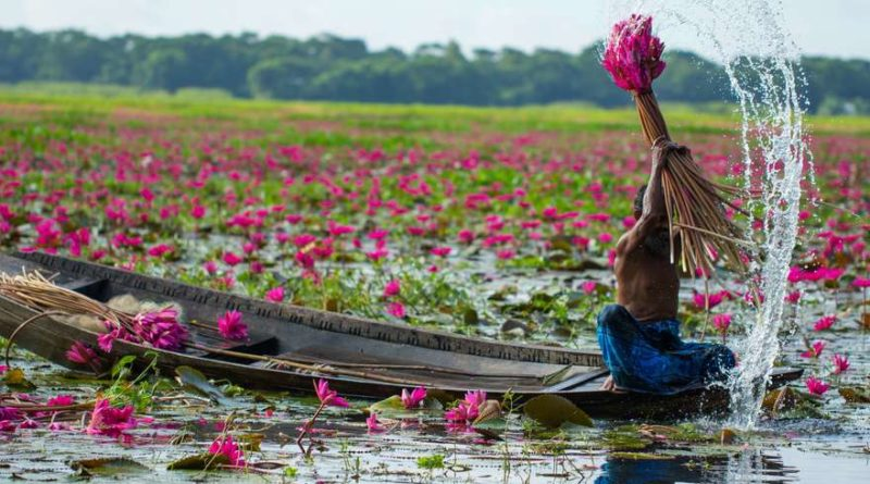 Bangladesh: Kingdom of water lily